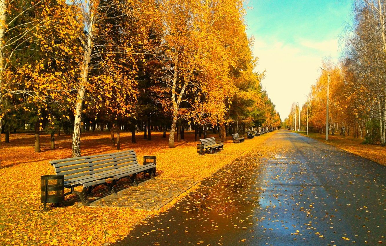 Photo wallpaper leaves, bench, foliage, the evening, Park, Golden autumn, Omsk