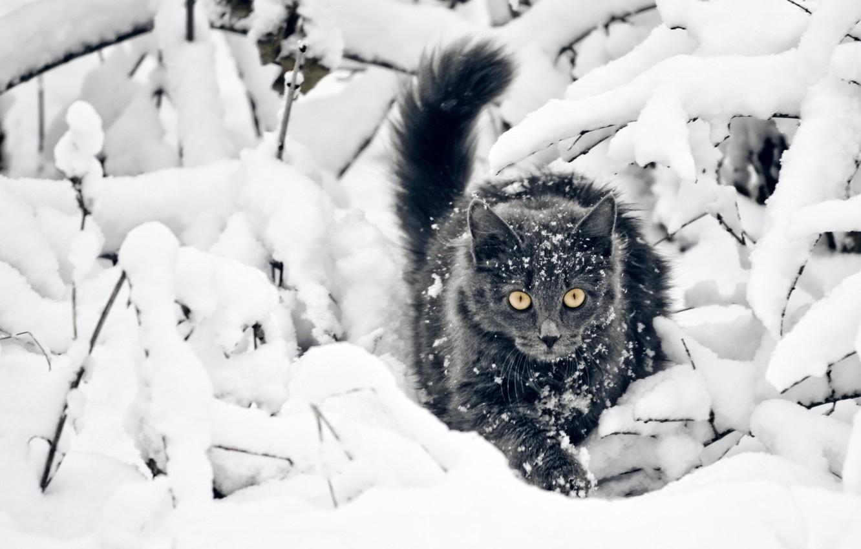 Photo wallpaper Look, Snow, Cat