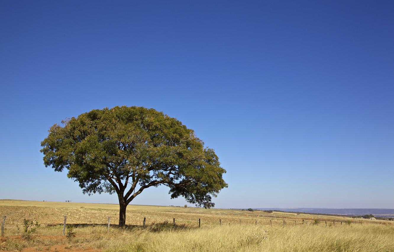 Photo wallpaper Sky, Tree, Brazil, Brasil, Fence, Farm, Brasilia, Closed
