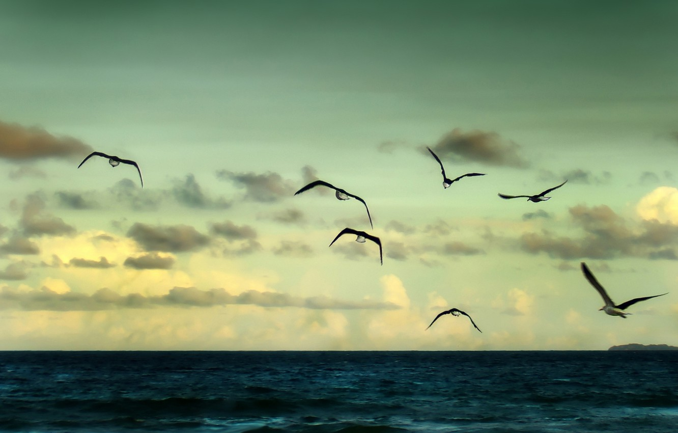 Photo wallpaper sea, the sky, freedom, water, clouds, flight, landscape, birds, nature, river, background, the ocean, widescreen, …