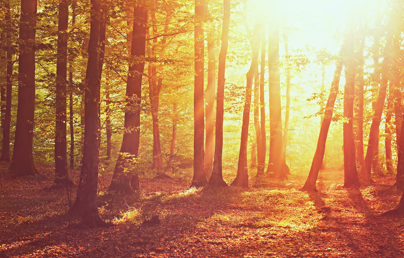 Photo wallpaper autumn, forest, grass, leaves, the sun, light, trees, nature