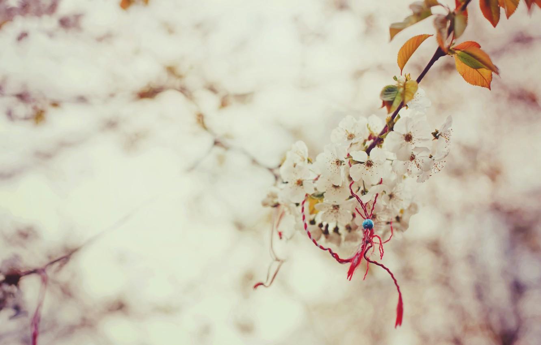 Photo wallpaper macro, branch, spring, Sakura, magic, the knot