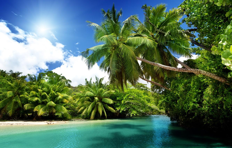 Photo wallpaper sea, the sun, tropics, palm trees, the ocean, summer, beach, sea, ocean, blue, paradise, vacation, ...