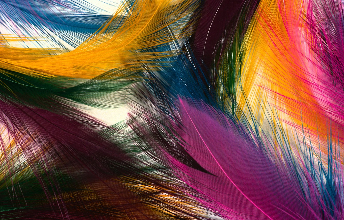 Photo wallpaper color, bright, texture, feathers
