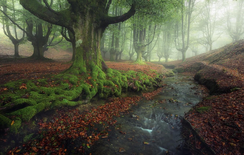 Photo wallpaper trees, stream, foliage, Spain, beech