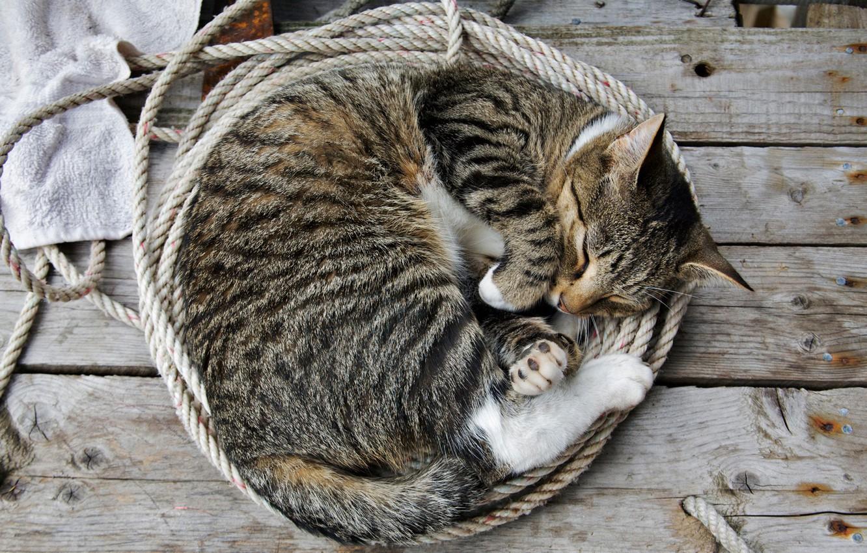 Photo wallpaper cat, sleep, verenki