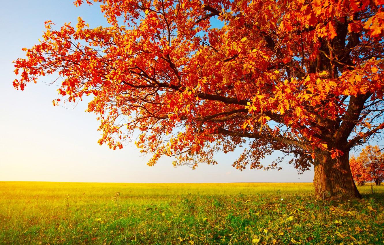 Photo wallpaper field, autumn, grass, leaves, tree
