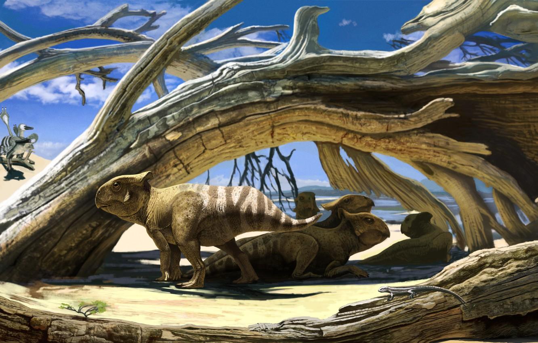 Photo wallpaper desert, small, Protoceratops, dinosaurs