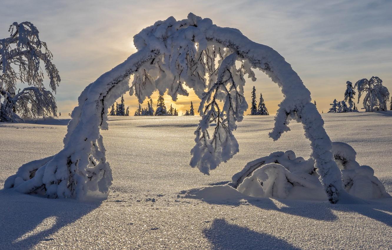 Photo wallpaper winter, snow, trees, arch, Sweden, Sweden, Lapland, Lapland