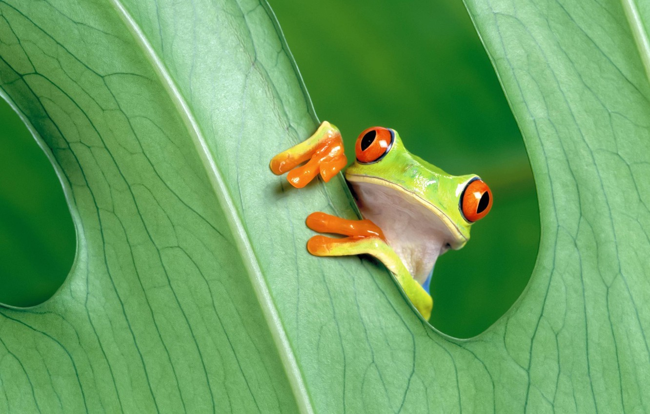 Photo wallpaper green, nature, frog, leaves