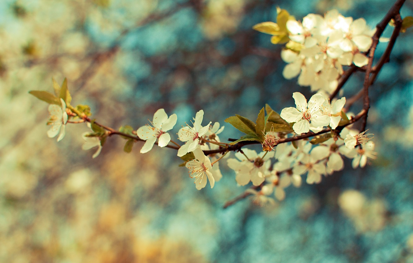 Photo wallpaper leaves, color, flowers, Wallpaper, plant, branch, spring, branch