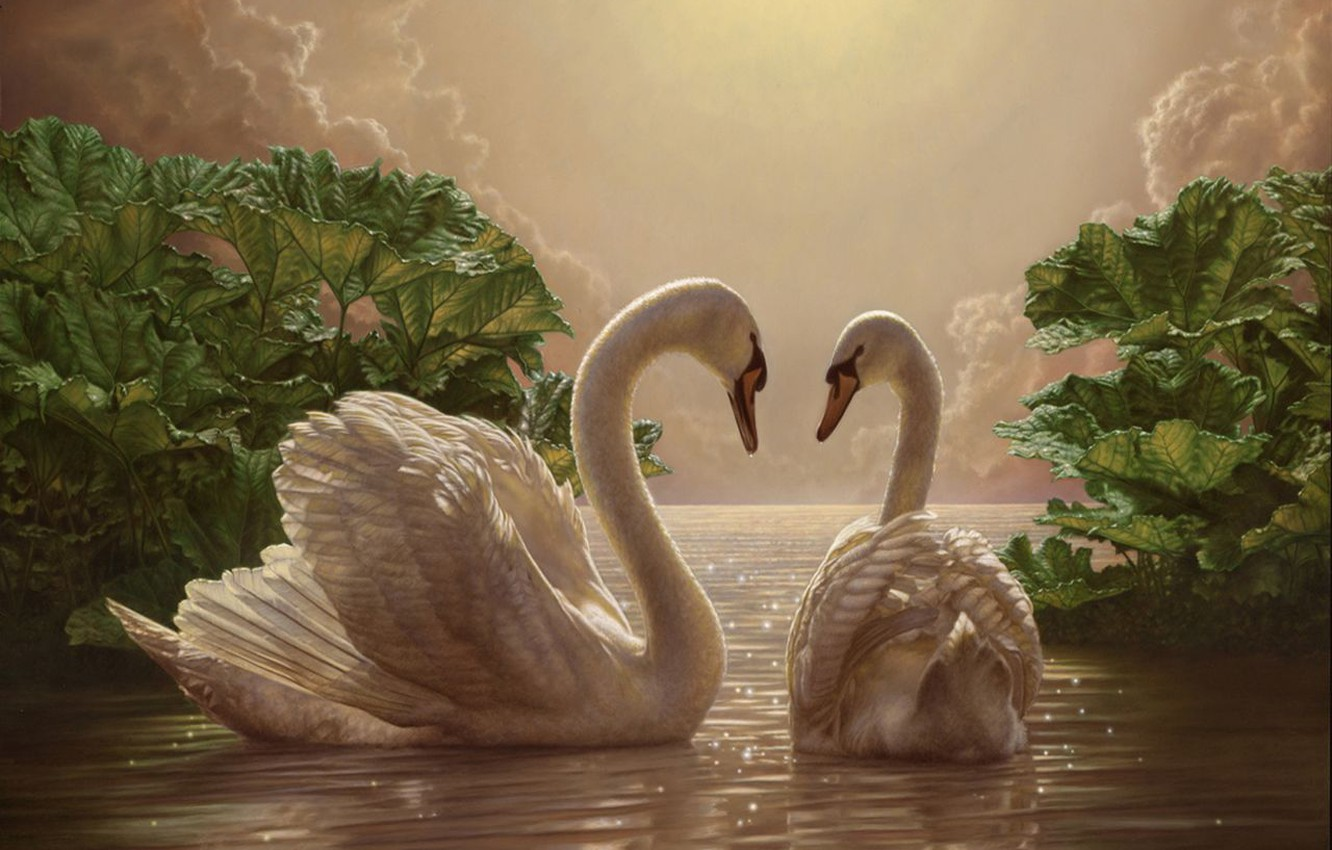 Photo wallpaper romance, picture, the evening, two, swans