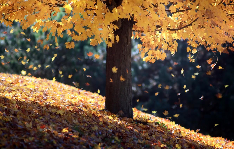 Photo wallpaper autumn, leaves, tree