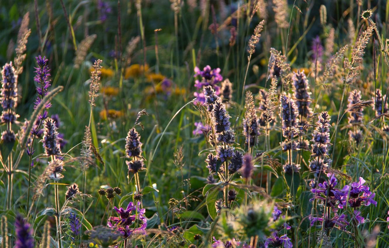 Photo wallpaper field, summer, grass, sunset, flowers, the evening, meadow, green, Adygea