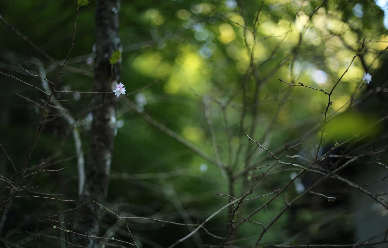 Photo wallpaper flower, branches, melancholy, bokeh