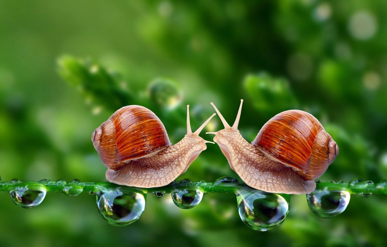 Photo wallpaper drops, macro, meeting, snails