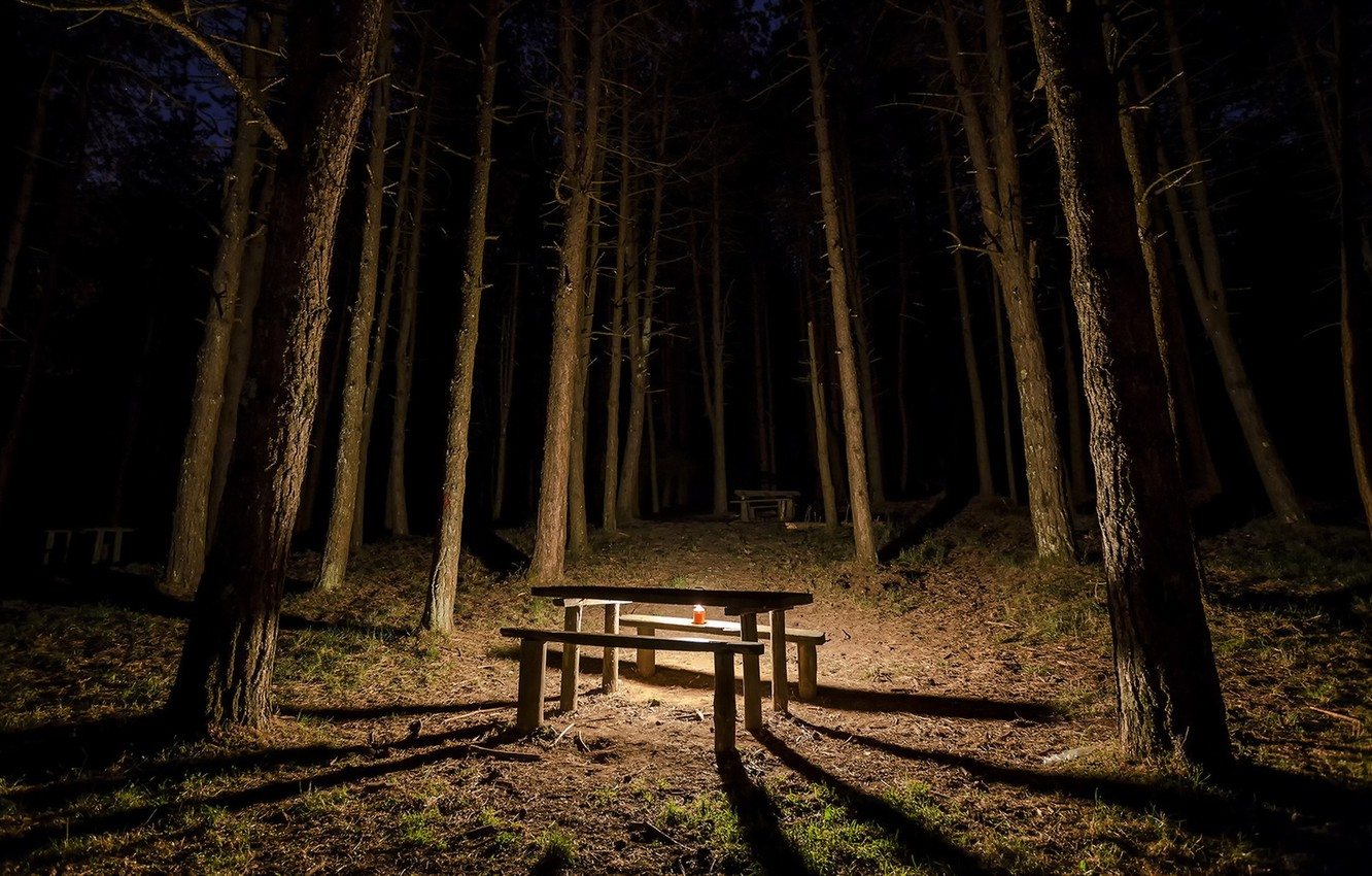 Photo wallpaper forest, night, table, candle, bench