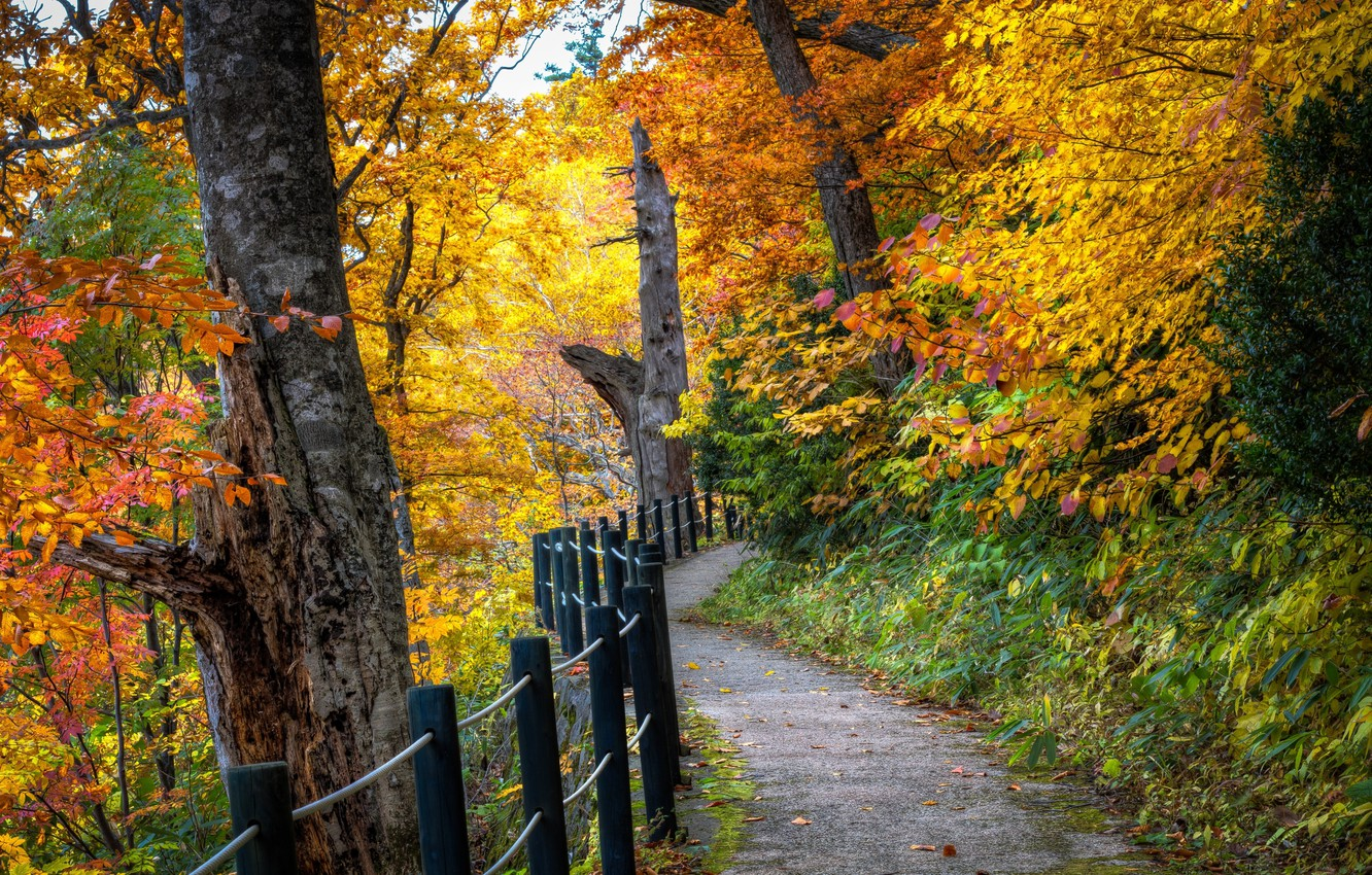 Photo wallpaper road, autumn, forest, leaves, trees, landscape, nature, tree