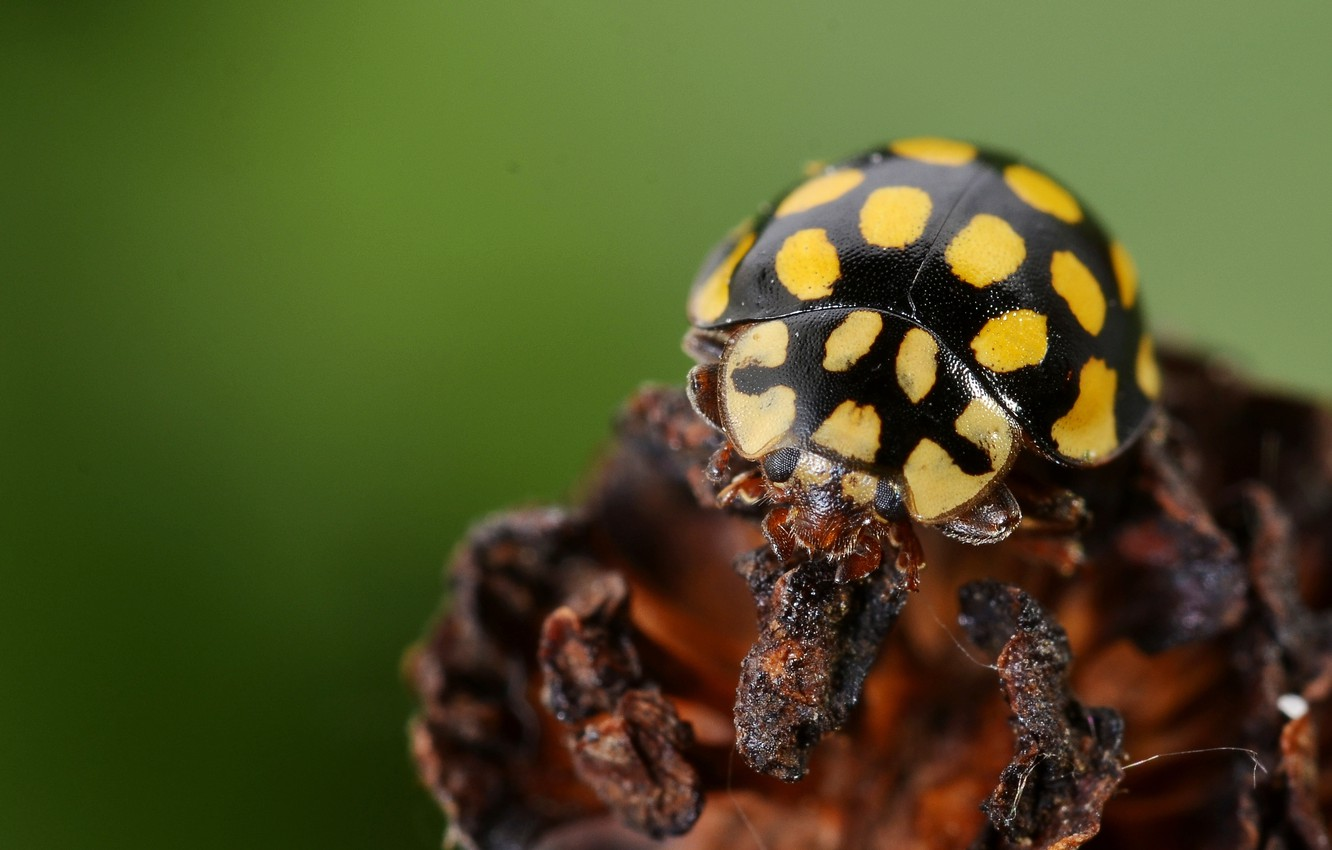 Photo wallpaper black, yellow, insect