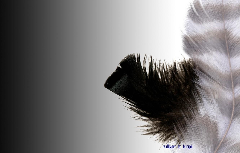 Photo wallpaper white, feathers, black