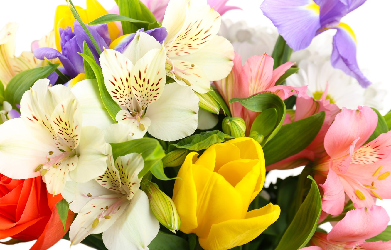 Photo wallpaper flowers, tulips, white background, irises, white chrysanthemums, Alstroemeria