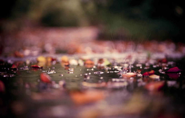 Photo wallpaper autumn, leaves, water, drops, macro, squirt, Park, puddles, photos
