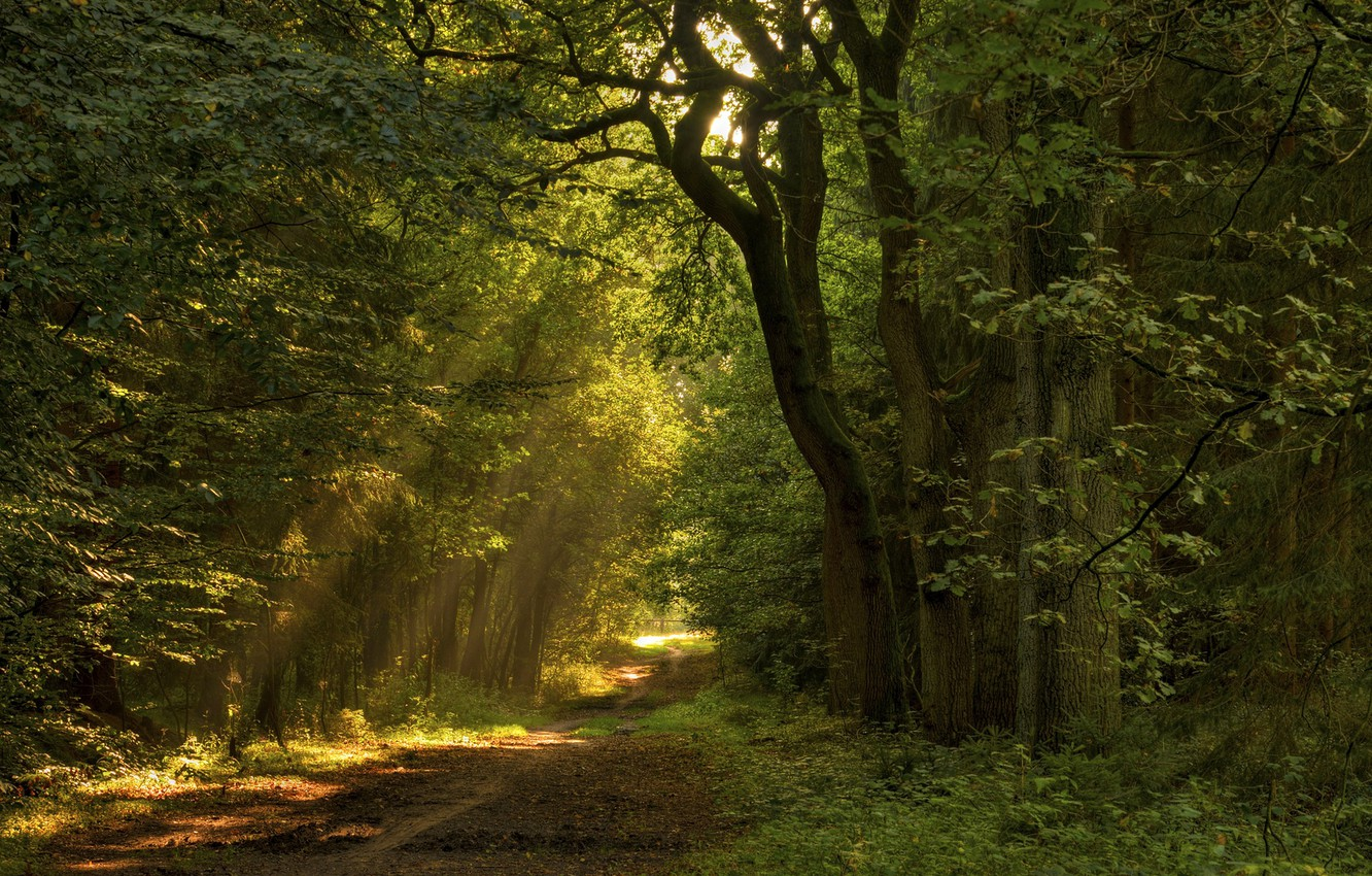 Photo wallpaper road, forest, leaves, the sun, rays, light, trees, nature, path