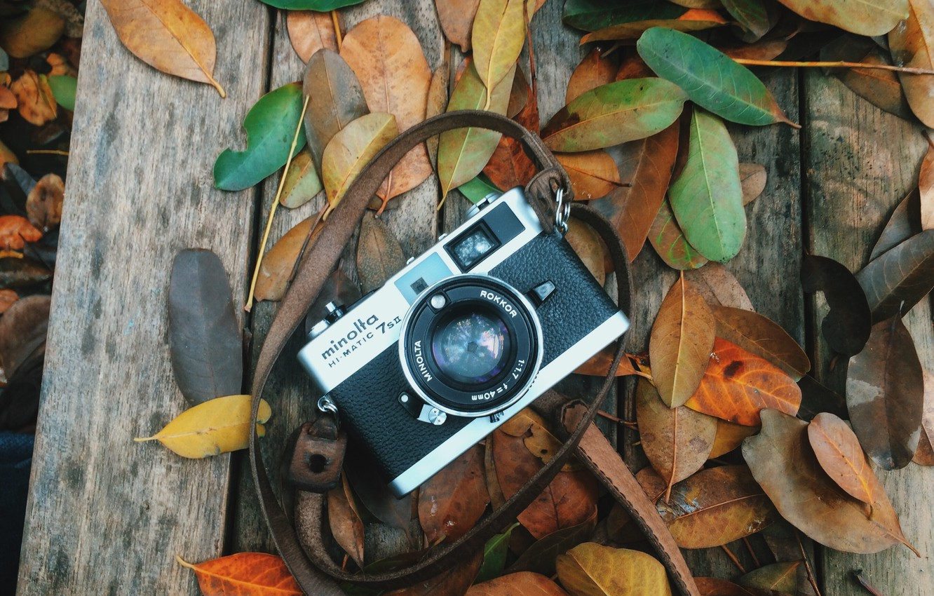 Photo wallpaper autumn, leaves, the camera