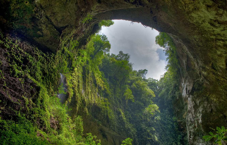 Photo wallpaper greens, plants, gorge