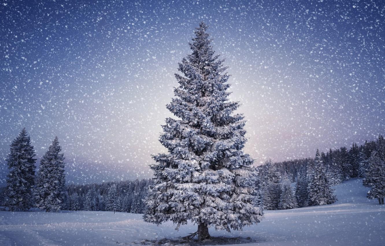 Photo wallpaper winter, snow, trees, landscape, mountains, nature