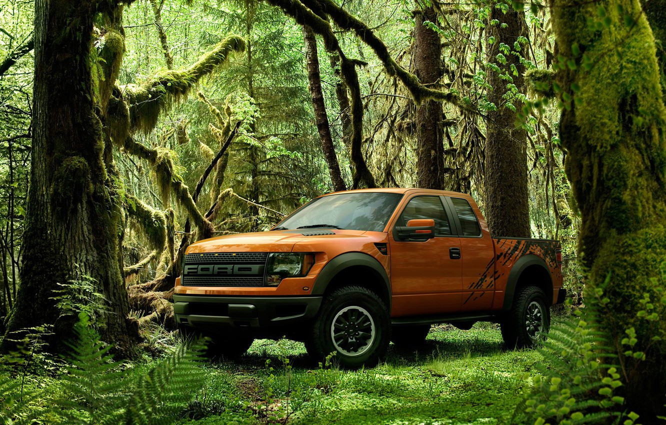 Photo wallpaper greens, forest, Pickup