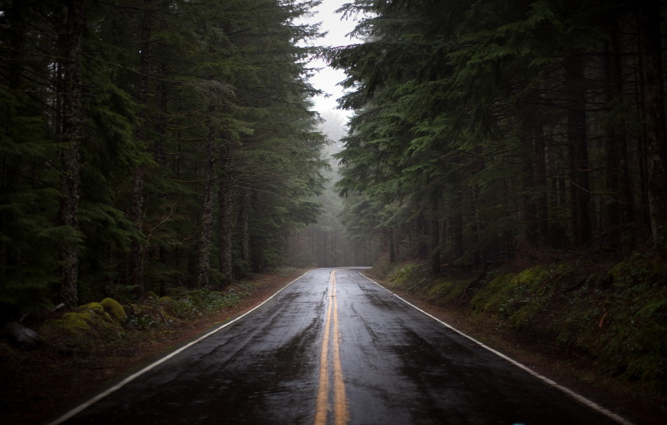 Photo wallpaper road, forest, pine