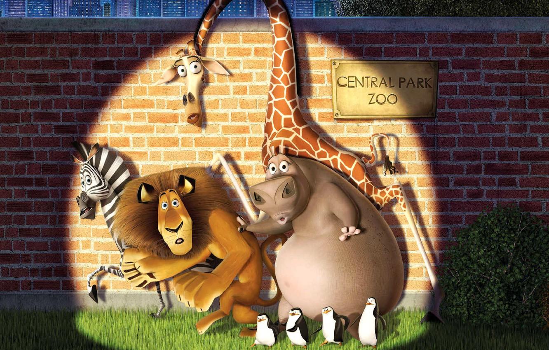 Photo wallpaper animals, cartoon, Madagascar