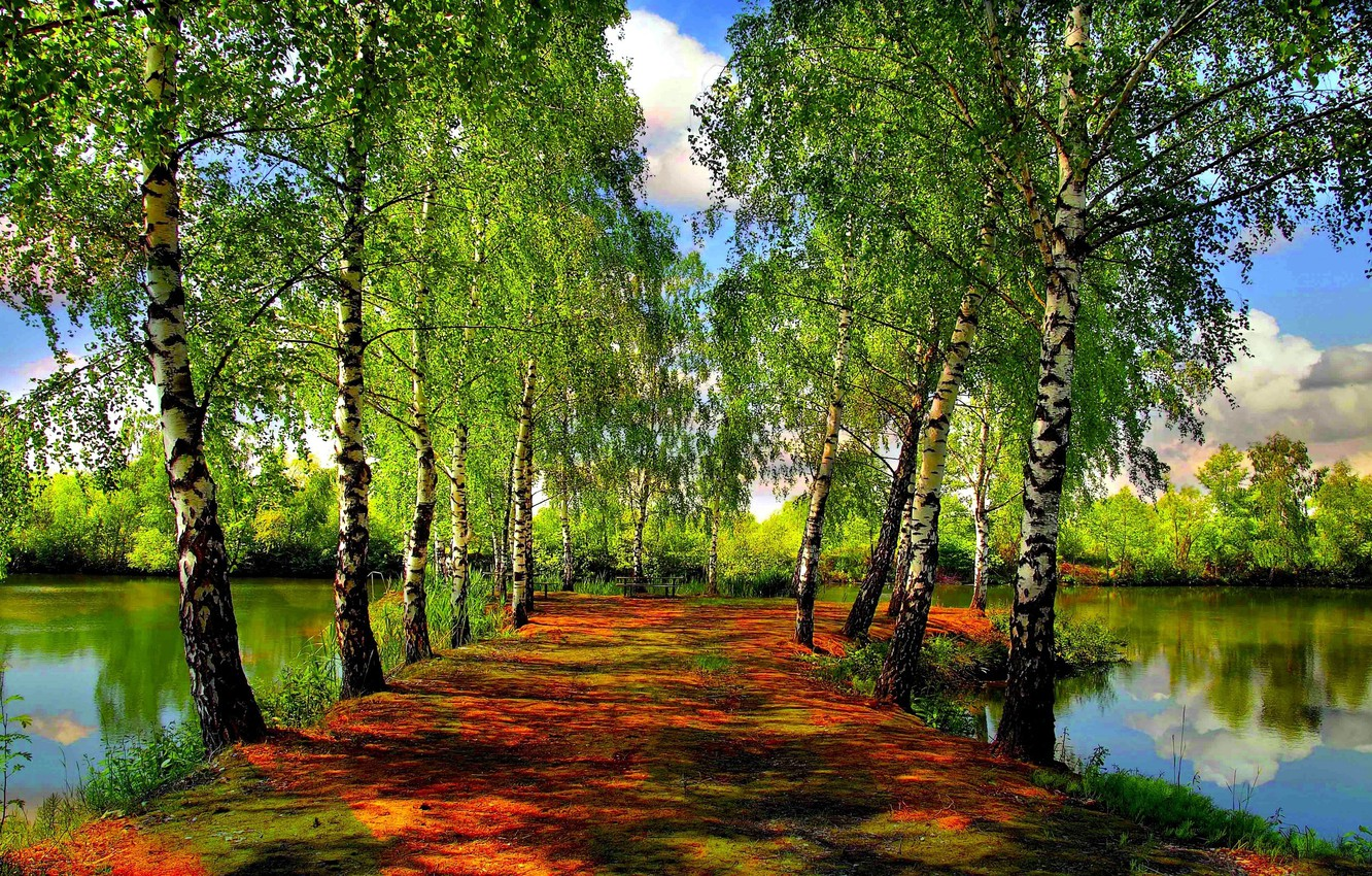 Photo wallpaper FOREST, The SKY, CLOUDS, GREENS, POND, SPRING, TREES, RIVER, LAKE, BIRCH