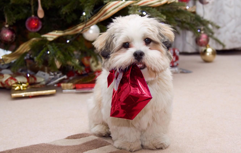 Photo wallpaper winter, holiday, new year, dog, gifts, tree, gift, celebration, holiday, New year, present season