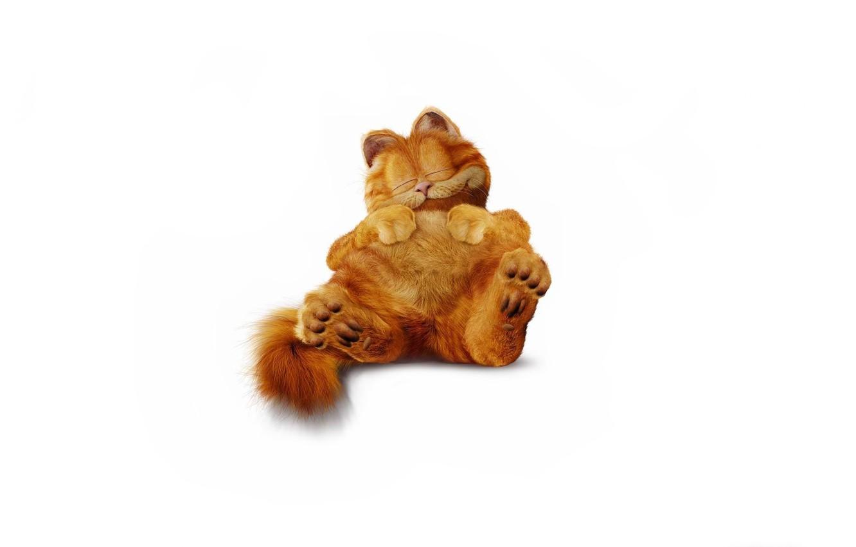 Photo wallpaper cat, minimalism, fluffy, red, sleeping, Garfield, Garfield