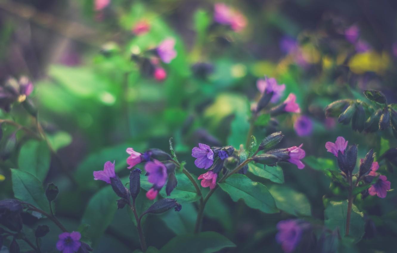 Photo wallpaper flowers, nature, Irina Joanne