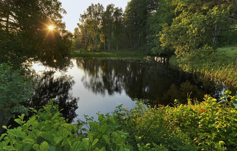 Photo wallpaper forest, trees, lake, Sweden, Sweden, Närke, Svartå