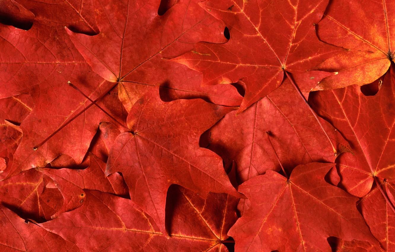 Photo wallpaper Leaves, Sony, Wallpaper, Xperia