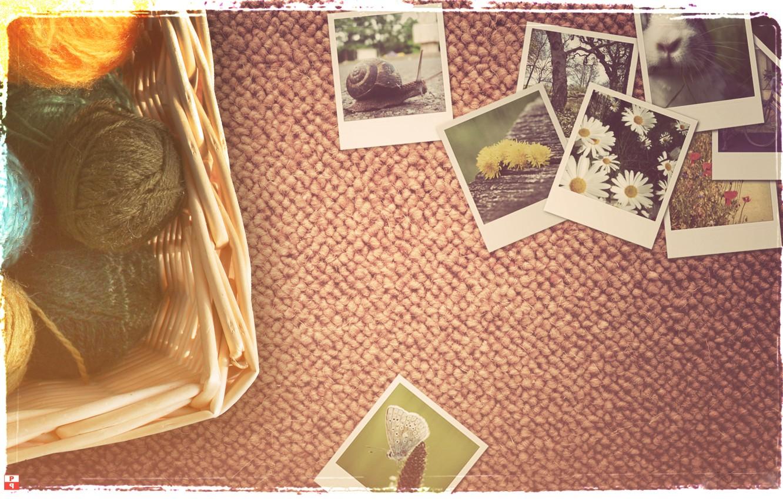 Photo wallpaper chamomile, snail, photos, thread, vintage, balls