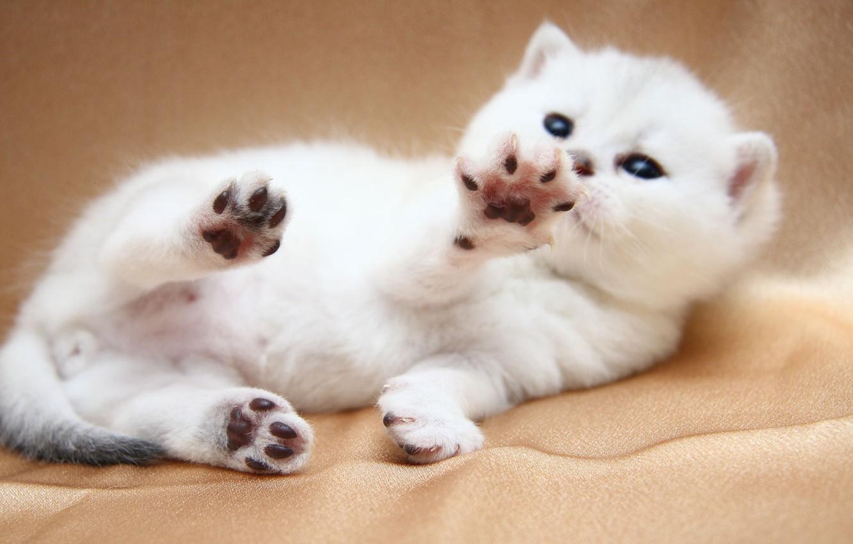 Photo wallpaper cat, cat, plays, cat, Tomcat