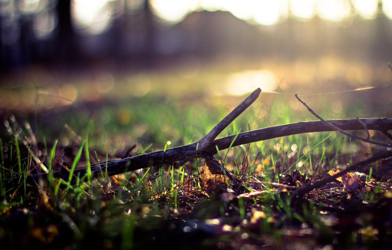 Photo wallpaper greens, grass, leaves, the sun, tree, web, spring, stick, bokeh