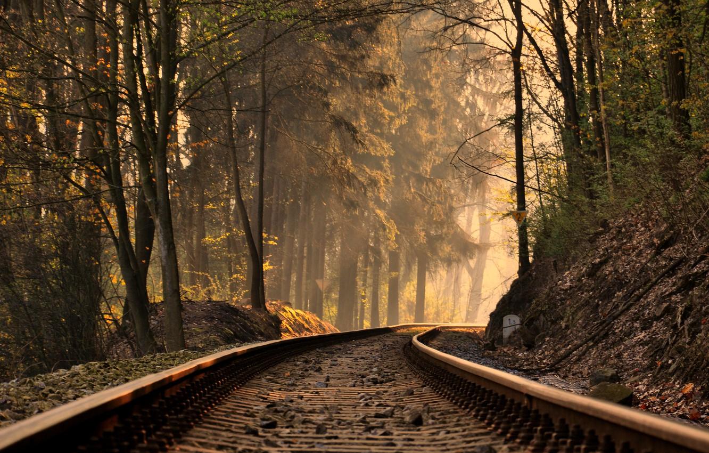 Photo wallpaper trees, landscape, nature, rails, slope, trees, landscape, nature, slope, rails