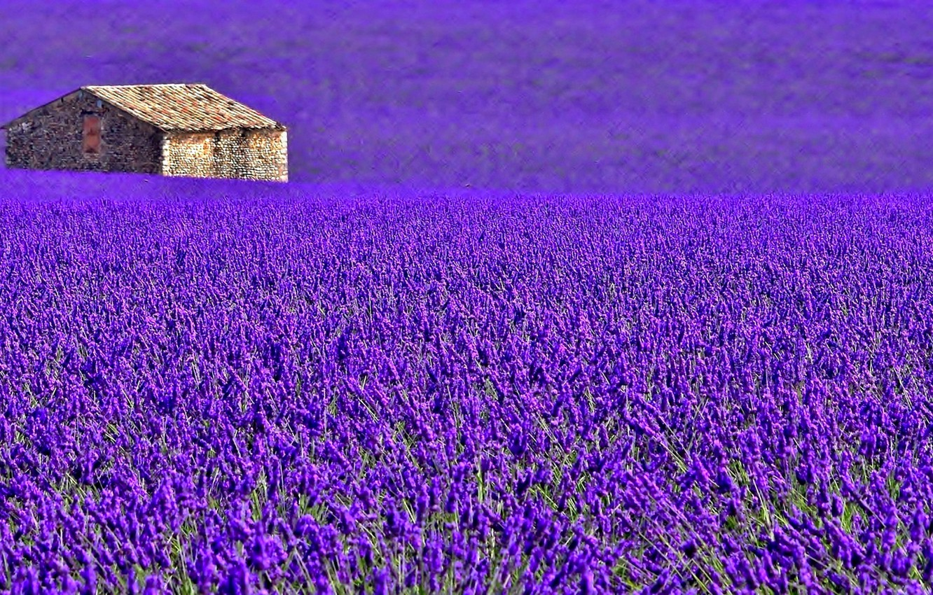 Photo wallpaper field, flowers, house, France, meadow, lavender, plantation, Provence