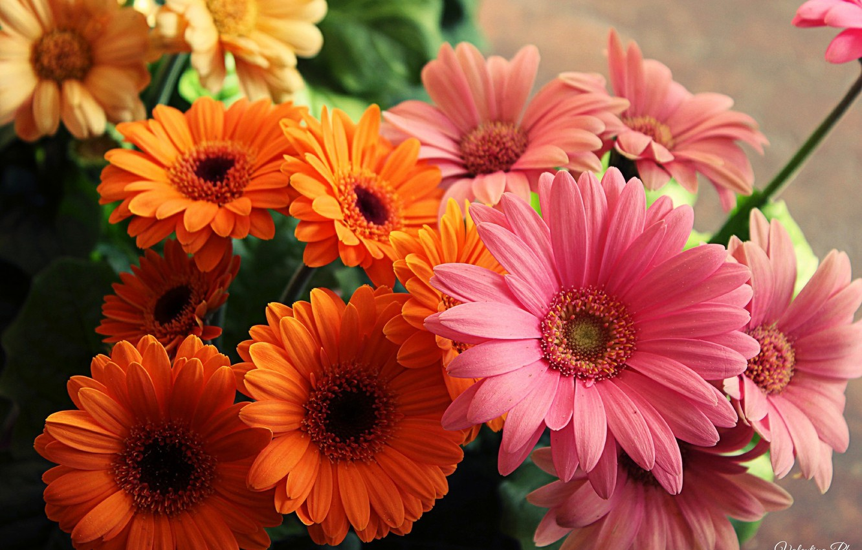 Photo wallpaper flowers, orange, yellow, pink, bright, bouquet, beautiful, yellow, pink, flowers, beautiful, orange, bouquet, bright