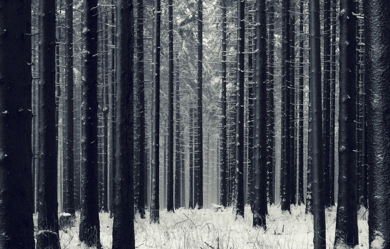 Photo wallpaper winter, forest, snow, trees