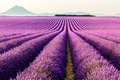 Picture flowers, plantation, mountains, Valensole, France, Provence, lavender