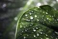 Picture drops, macro, leaf