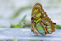 Picture blur, antennae, wings, butterfly
