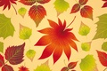 Picture maple, autumn, background, leaves, autumn, leaves